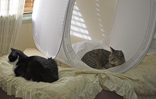 Inconvenient cats